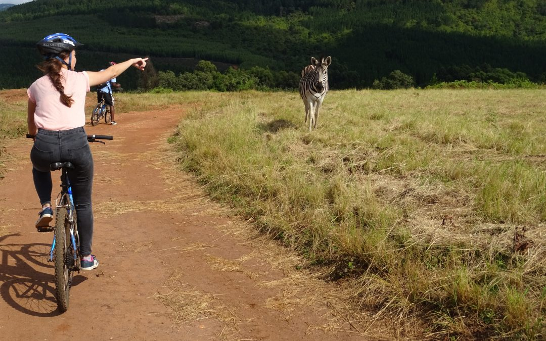 Fietsen tussen de Zebra's in Milwane National park